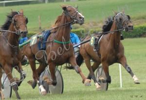Courses Segre 2012 04