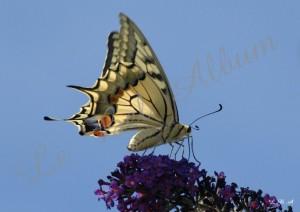 Papillons 2012 09