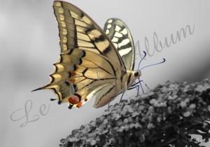Papillons 2012 10